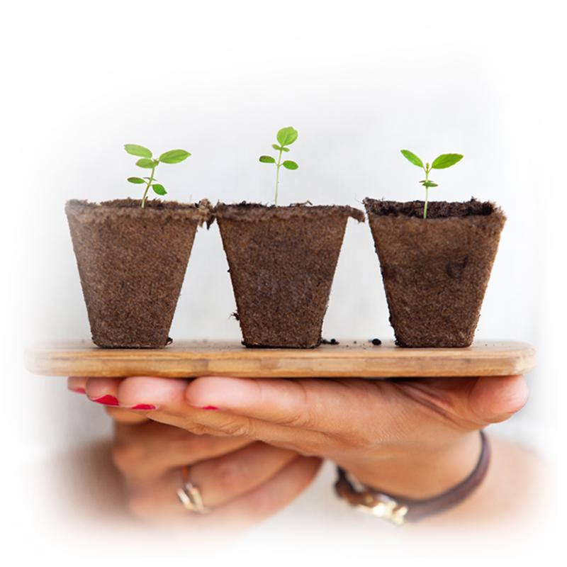 3pflanzen